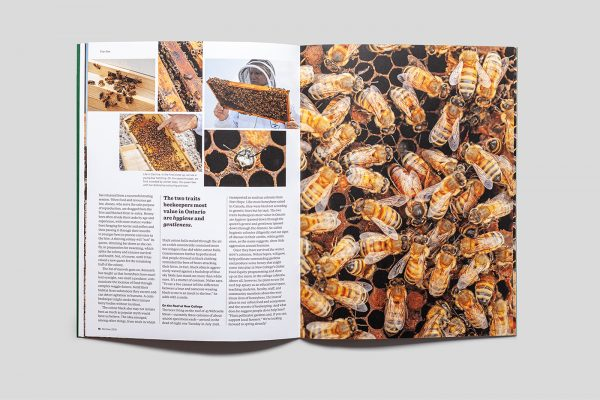 ReNew Magazine feature article: Plan Bee
